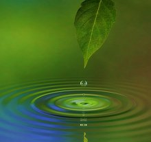Welcome to my Blog. Library Image: Leaf and Water